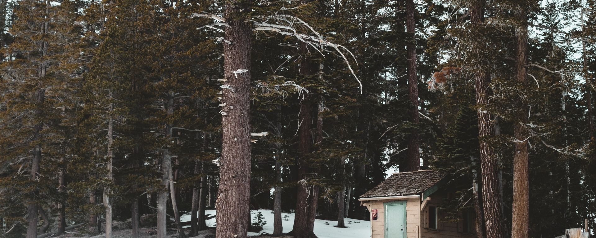 An image of a small cabin in a snowy forest.